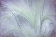 Jenny Rainbow - Dreamy Softness. Pastel Grasses