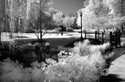Black And White Nature Landscapes Posters - Dreamy Surreal Black White Infrared Landscape Poster by Kathy Fornal