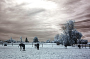 White Horse  Framed Prints - Dreamy Surreal Infrared Horse Landscape Print by Kathy Fornal