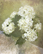 Vase Of Flowers Posters - Dreamy Vintage Cottage Chic White Hydrangeas Poster by Kathy Fornal