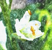 Museum Drawings Metal Prints - Drenched In White Flowers V  Macro Metal Print by Rosemarie E Seppala