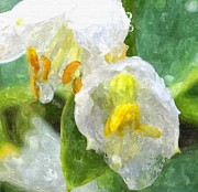 Raindrops Drawings Prints - Drenched In White IV Hosta Flowers Macro Print by Rosemarie E Seppala