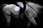 Toni Thomas - Dressage Black White