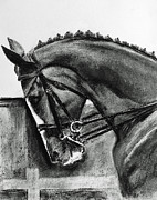 Dressage Drawings - Dressage Horse					 by John Eaglesham