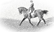 Dressage Drawings - Dressage In Pencil by Alice Gipson