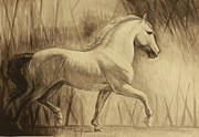 Horses Drawings Prints - Dressage Lipizzan Print by Silvana Gabudean