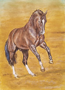 Stallone Paintings - DRESSAGE STALLION -bay horse by Dorota Zdunska
