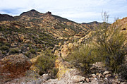 Cliff Lee Metal Prints - Dressed in Yellow Apache Trail Metal Print by Lee Craig