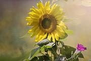 Rhonda McClure - Dressed Up Sunflower