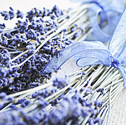 Lavender Flowers Photos - Dried lavender by Elena Elisseeva
