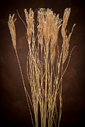 Prairie Grass Originals - Dried Winter Grasses by Steve Gadomski