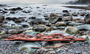 Juan De Fuca Provincial Park Prints - Drift Log Print by James Wheeler