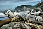 Wacom Tablet Prints - Drift Wood on Rialto Beach Print by Paddrick Mackin