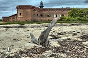 Dry Tortugas Prints - Drift Wood Seal Print by Adam Jewell