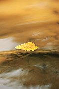 Water In Creek Prints - Drifting Along Print by Lyndsey Warren