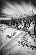 Drifting Snow Metal Prints - Drifting Metal Print by John Farnan