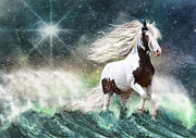 Gypsy Cob Framed Prints - Drifting with the Tides Framed Print by Trudi Simmonds