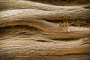 Arizona Photos - Driftwood 1 by Adam Romanowicz