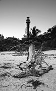 Florida House Posters - Driftwood and Lighthouse Poster by Steven Ainsworth