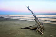 Driftwood At Dusk Print by Phill  Doherty
