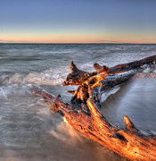 Whitefish Posters - Driftwood at Whitefish Point Poster by Twenty Two North Photography