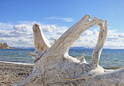 Light And Dark  Prints - Driftwood at Yellowstone Lake  Print by Jennie Marie Schell