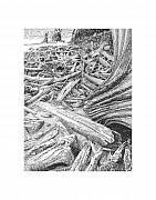 Beaches Drawings Prints - Driftwood beach Print by Jack Pumphrey