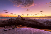 Pink Sunset Posters - Driftwood Poster by Debra and Dave Vanderlaan