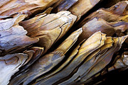 Photo-manipulation Photos - Driftwood Edges by ABeautifulSky  Photography
