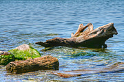 Beach Decor Photos - Driftwood by Heather Allen