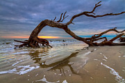 Tree Roots Photo Prints - Driftwood II Print by Debra and Dave Vanderlaan