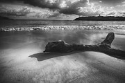 Punta Morillos Prints - Driftwood on a  Beach Print by George Oze
