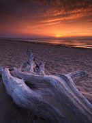Dry Lake Photos - Driftwood on a shore of lake Huron sunset scenery by Oleksiy Maksymenko
