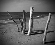 Italian Landscapes Prints - Driftwood on Beach Print by Alan Socolik