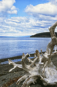 Rain Digital Art Metal Prints - Driftwood on Beach Metal Print by Thomas R Fletcher