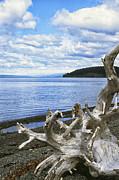 Driftwood On Beach Print by Thomas R Fletcher