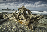 Driftwood On Rialto Beach In Olympic National Park No. 144 Print by Randall Nyhof