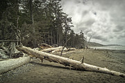 Randall Nyhof - Driftwood on Rialto Beach in Olympic National Park No. 217