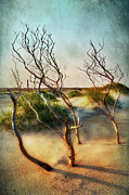 Sea Oats Prints - Driftwood Sand Dunes and Lighthouses II Print by Dan Carmichael