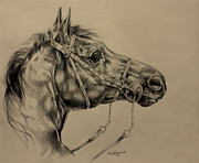 Mare Drawings - Drinking Horse Mountain by Derrick Higgins