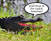 Florida Gators Prints - Drop In For Lunch Greeting Card Print by Al Powell Photography USA
