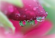 Yumi Johnson - Droplets on the Rose