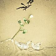 Dropped Flower Print by Tom Gowanlock