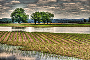 Photo-based Photo Framed Prints - Drowning a Cornfield Framed Print by William Fields