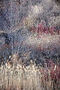 Muted Photo Prints - Dry grasses and bare trees Print by Elena Elisseeva