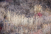 Muted Photo Prints - Dry grasses and bare trees in winter forest Print by Elena Elisseeva