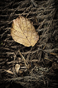 Net Photo Metal Prints - Dry Leaf on Sisal Metal Print by Scott Norris