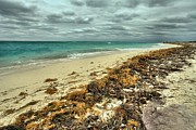 Dry Tortugas Beach Print by Adam Jewell
