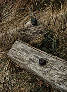 Old Fence Posts Art - Dry Wave by Odd Jeppesen