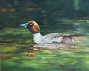 Becky Paintings - Duck by Becky West